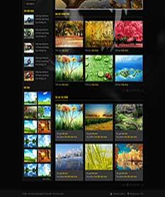 Mẫu thiết kế web thư viện hình ảnh Photographic